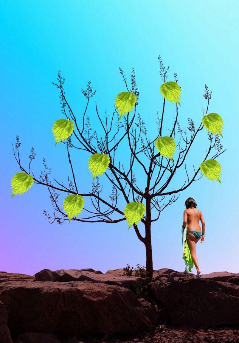 TreeOfLife3rd